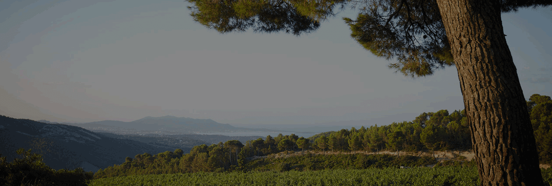 Vin de Corse