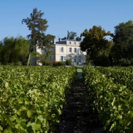 Les vignes du Château Belgrave