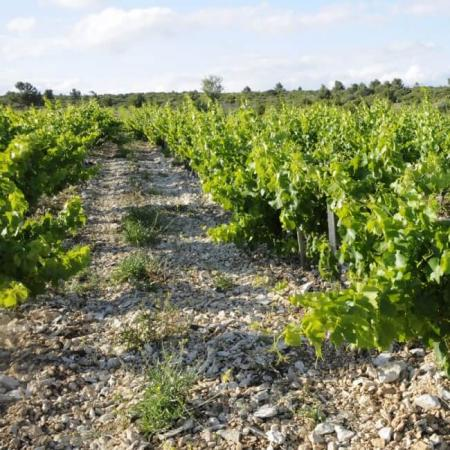 Vignoble Coupe-Roses