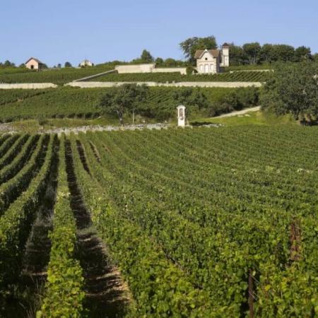 Le vignoble du Domaine Boisson
