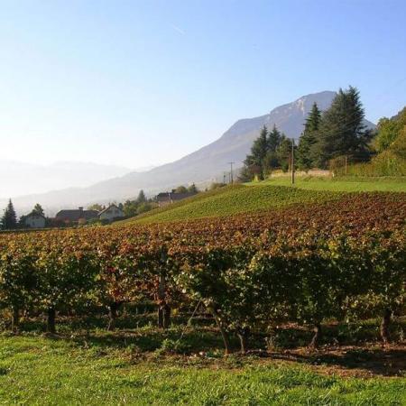 Le joli vignoble de l'Arbois