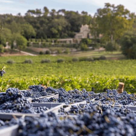 Les vignes de Château Margüi