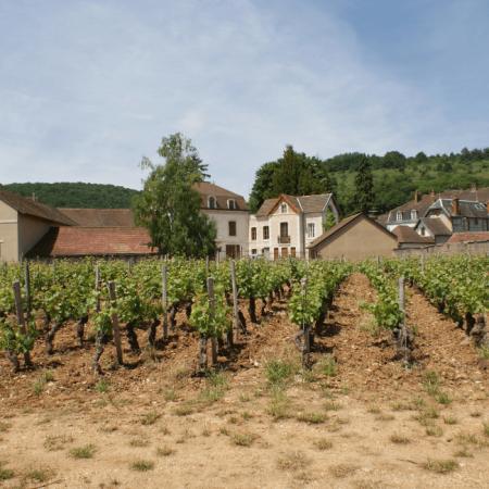 Le terroir d'exception de Chambolle-Musigny