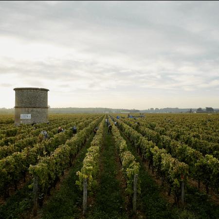 Le vignoble du Château Coutet