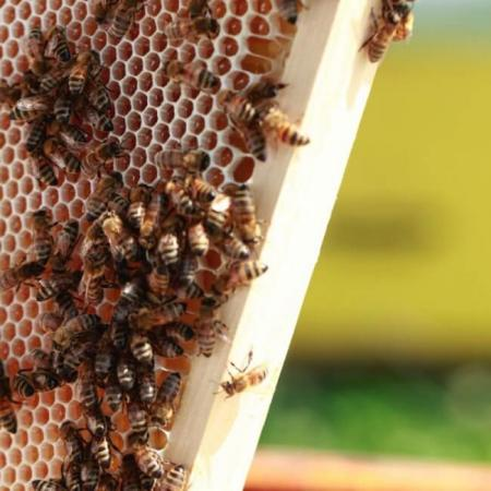 Une ruche implantée au domaine