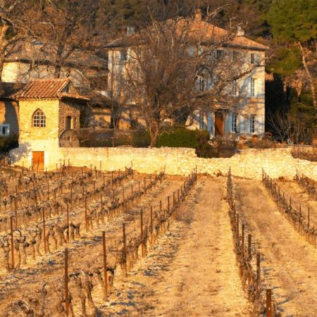 Les vignes du Château de Saint Cosme