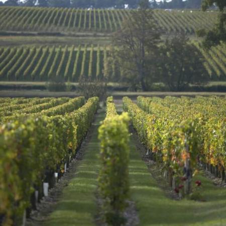 Le vignoble de Château La Garde