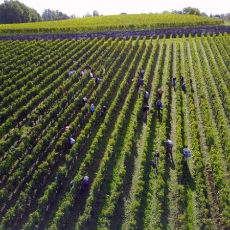 Les vignes du Château Valandraud