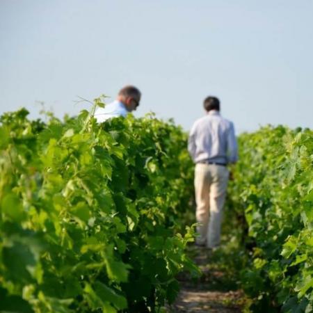 Les vignes du Château
