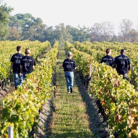 Les vignes du Château Duhart-Milon