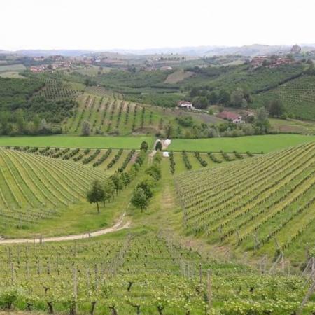 Vigne du Château Gravas