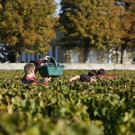 Travail à la vigne