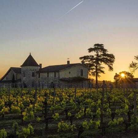 Vignes du Château La Mondotte