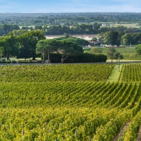 Vignoble Quinault L'Enclos