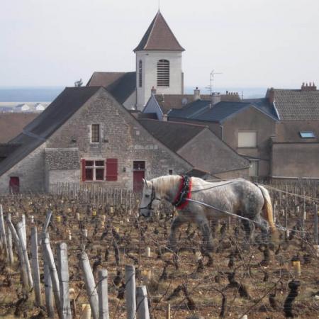 Le travail à la vigne