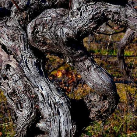 Le vignoble d'Apalta