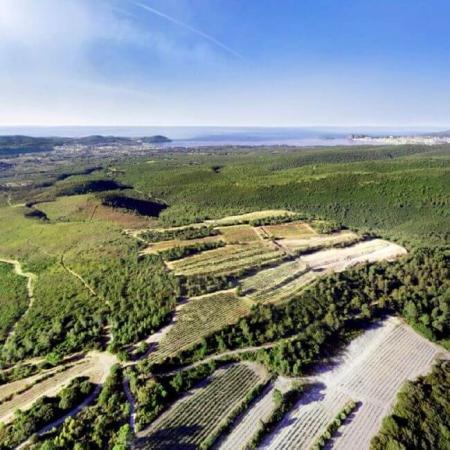 Un vignoble provençal perché à plus de 400 m !