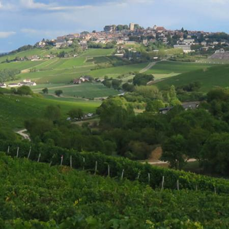 Les vignes de Sancerre