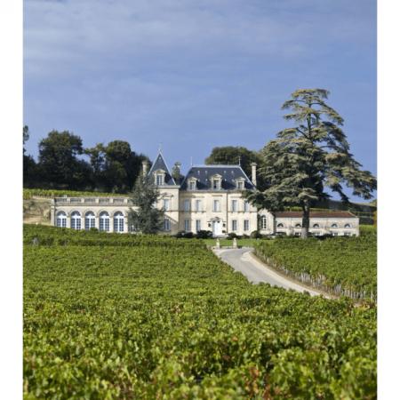 Vigne du Château Fonplégade