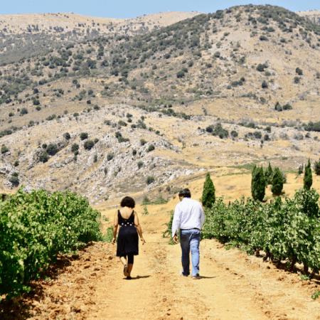 Les vignes du domaine, entourées de montagnes