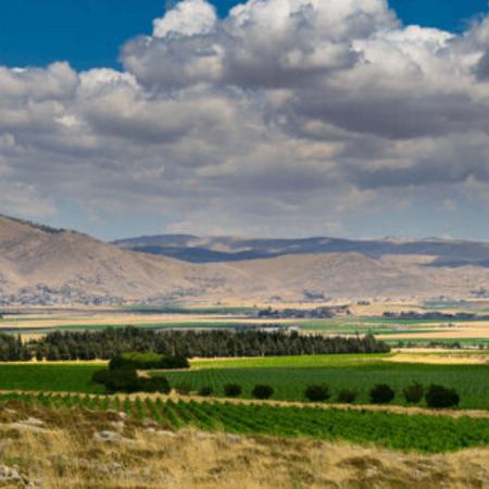 Les vignes palissées du domaine