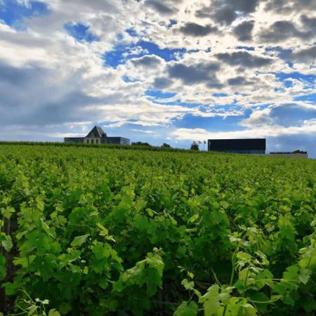 Vigne du Château