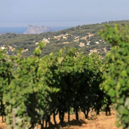 Les vignes, en Provence à Bandol
