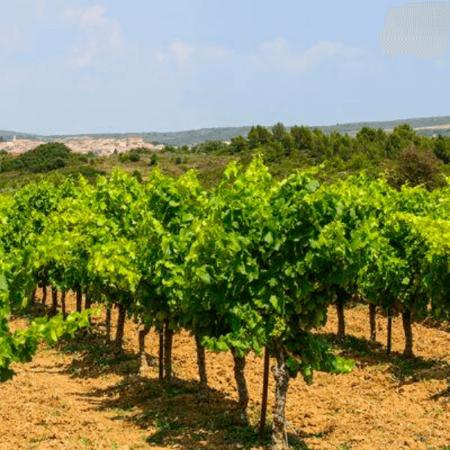 Le vignoble du Domaine Vaïsse