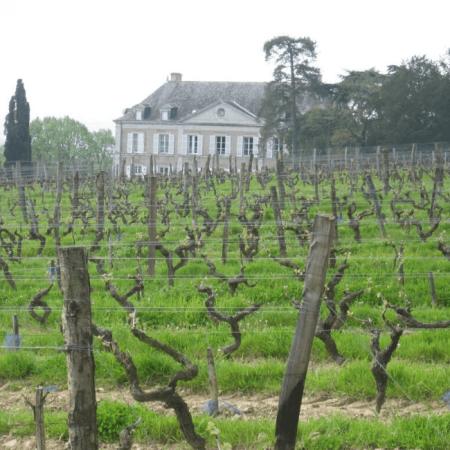Les vignes et la façade de la Coulée de Serrant