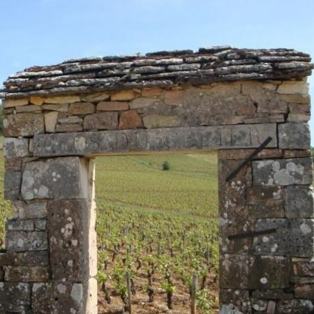 Les vignes du Domaine Joblot