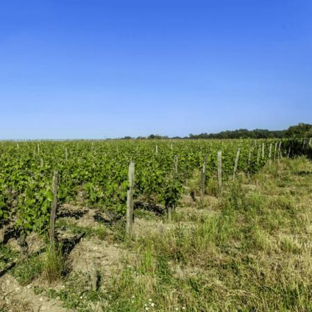L'agriculture bio au service du terroir