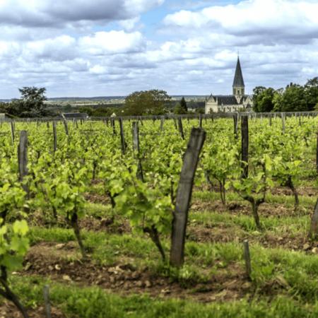 Les vignes enherbées du domaine