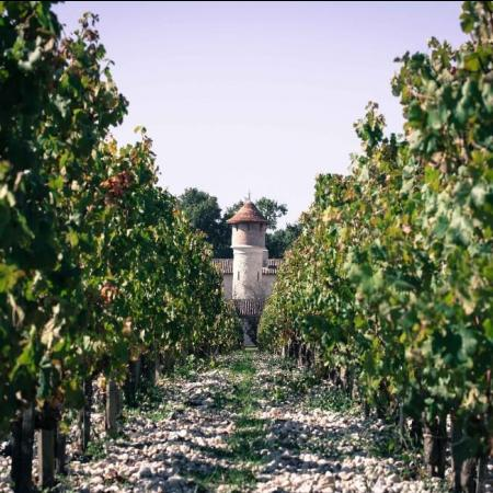Vignoble du Château Brane-Cantenac