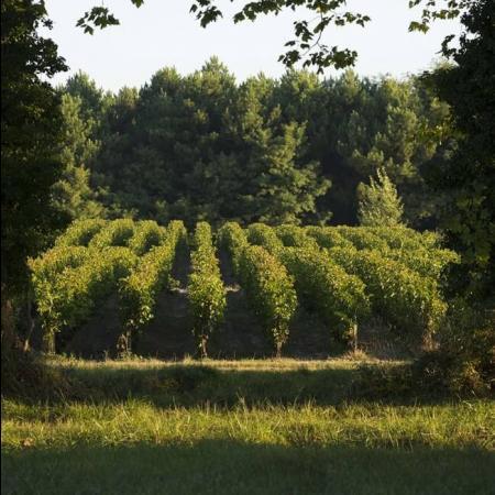 Vignoble du Château Olivier