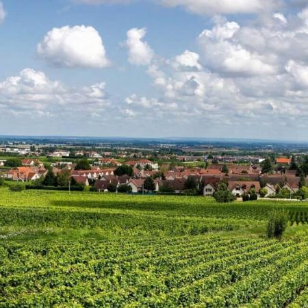 Vignoble du Domaine Sylvain Pataille