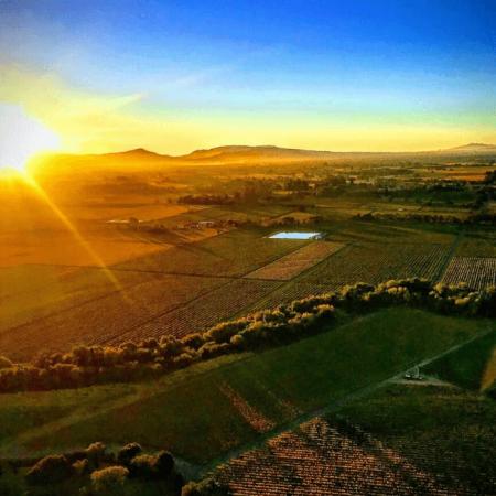 Vignobles de la Sonoma Vallée