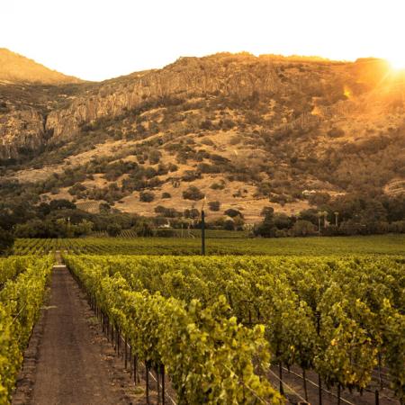 Le vignoble magnifique de Napa Valley