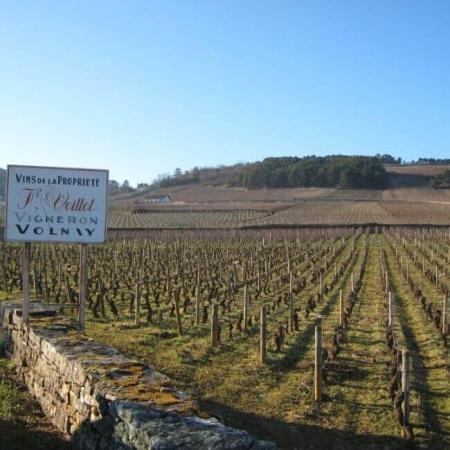 Les vignes du domaine en Bourgogne