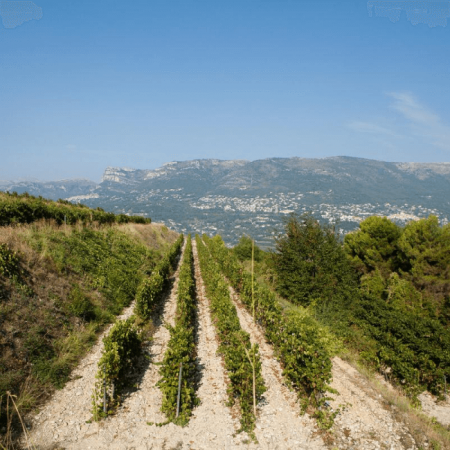 Le Vignoble du Clos Saint Vincent