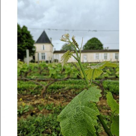 Vignoble du Château Climens
