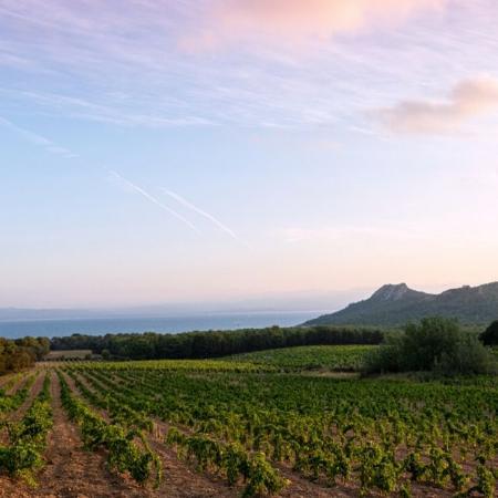 Vignoble du Domaine de l'île