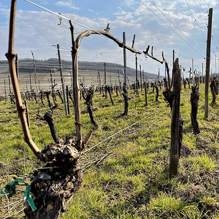 Le vignoble du Domaine du Rêveur