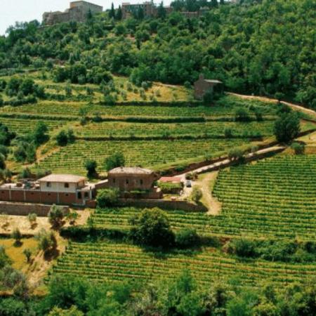 Le vignoble Marroneto