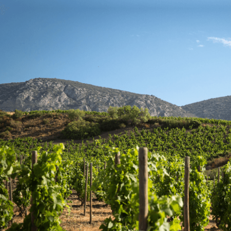 Le vignoble de Mas Amiel
