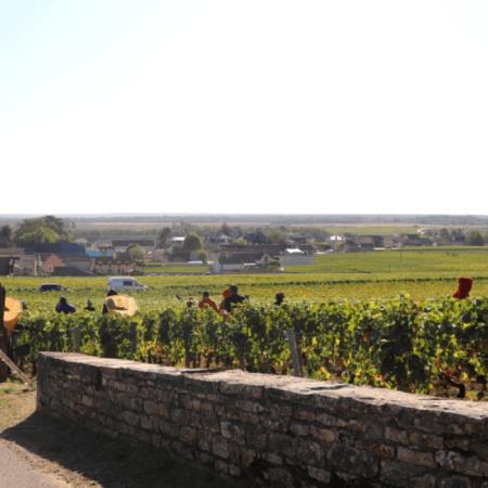 Le vignoble du Domaine Lamarche