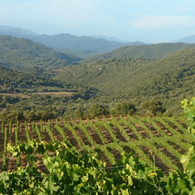 Vue sur les vignes du domaine Abbatucci