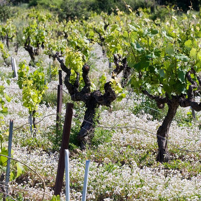 Les vignes de Montirius