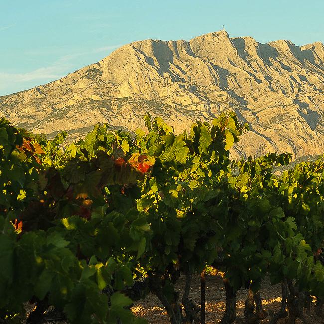 vignes et montagne ensoleillées au second plan