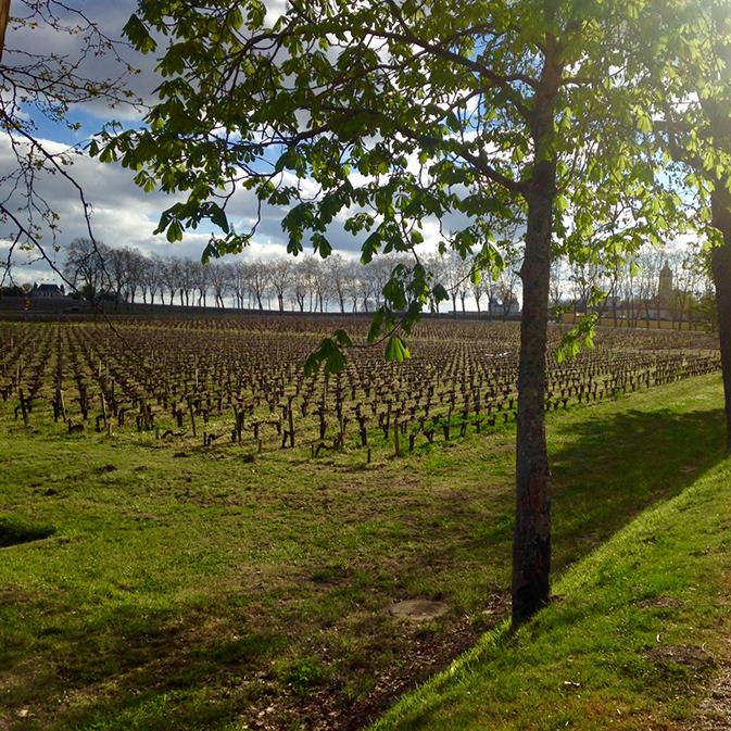 Les vignes du Château Margaux