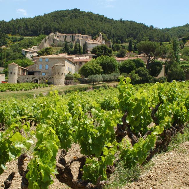 Les vignes du Beaujolais